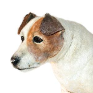 Pancho, El Perro Millonario. Perro Original De La Película. 2014